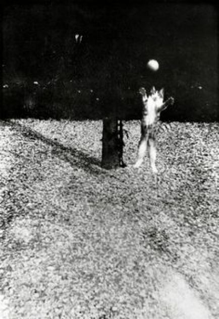 Walker Evans, Cat Playing with Ball