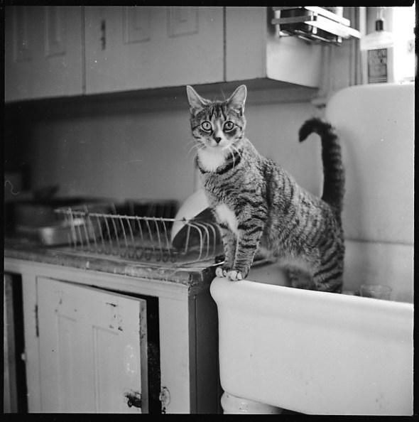 Walker Evans, Cat in the Sink