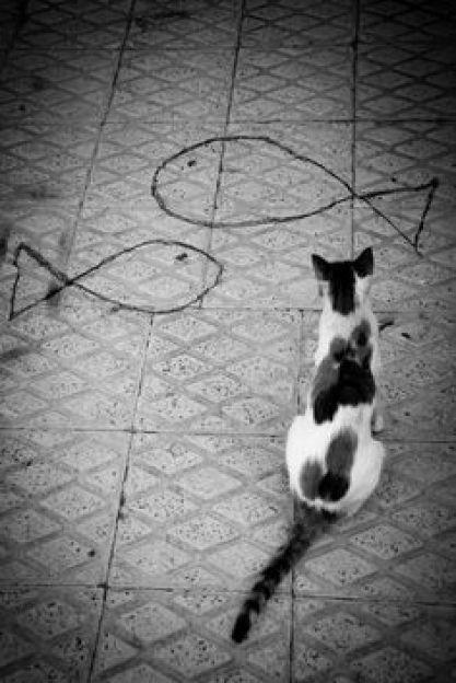 Walker Evans, Cat