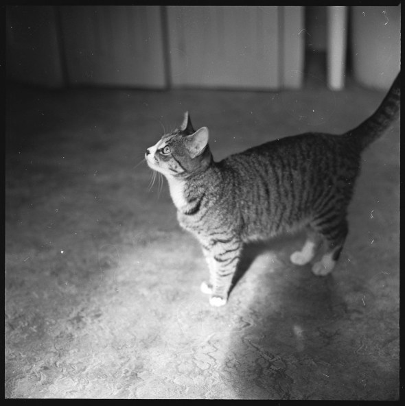 Walker Evans, Tabby Cat 3