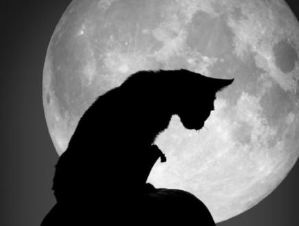 Superstitions about cats at the Great Cat