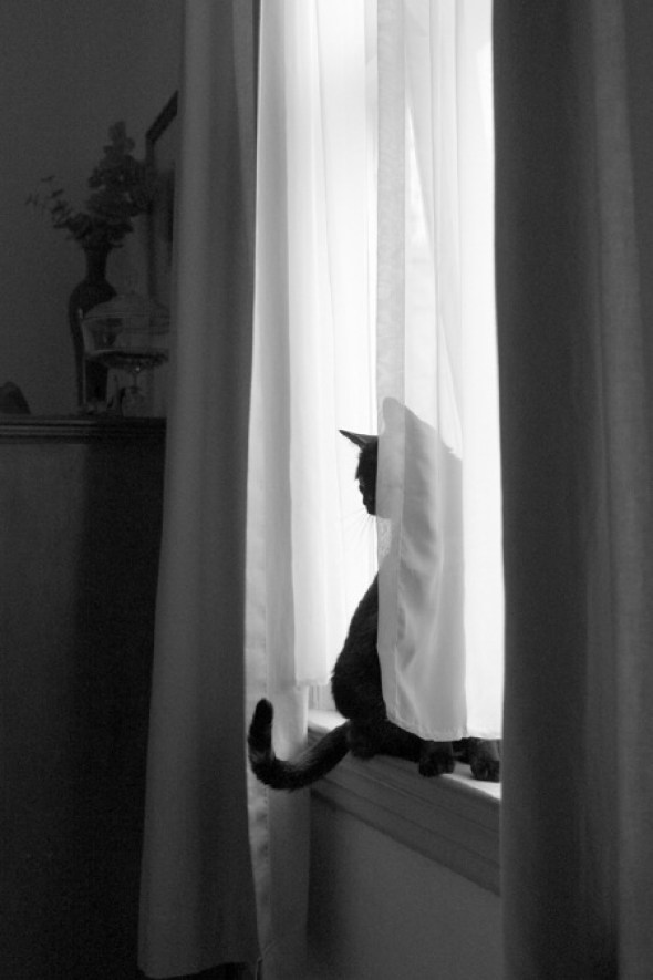Dianne Woods, Black and White Cat 4