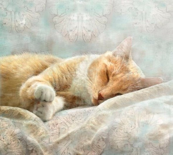 Dianne Woods, Ginger Cat Sleeping