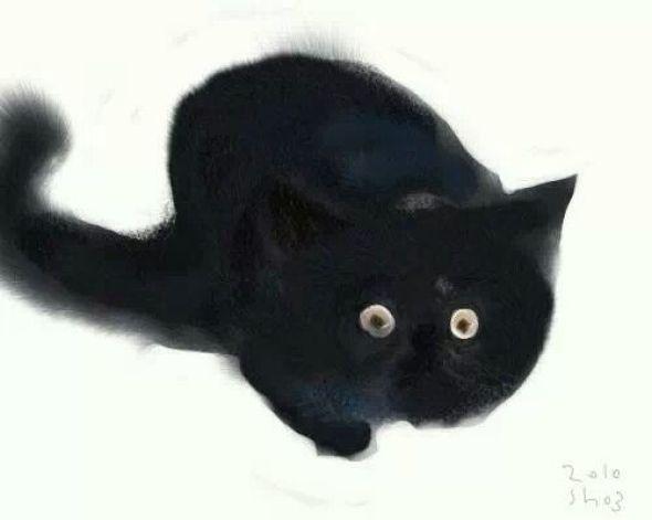 Shozo Ozaki, Black Cat