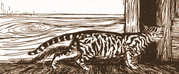 Rackham, cat illustration