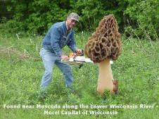 Wisconsin Morel