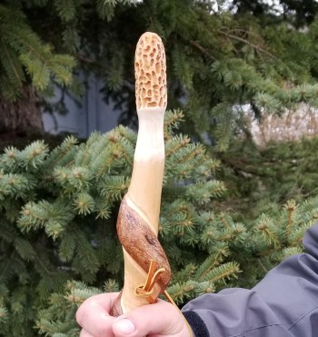 Morel Hiking Stick #3