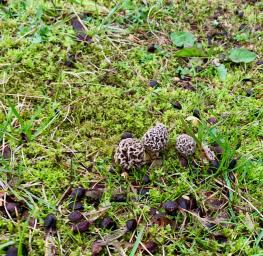 CT_Washington_20200416_Morels20 (Large)
