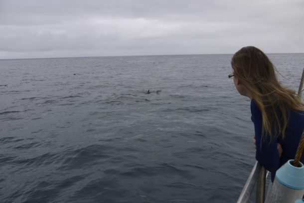 Infinity Expedition-Some of the many dolphins who came to say hello