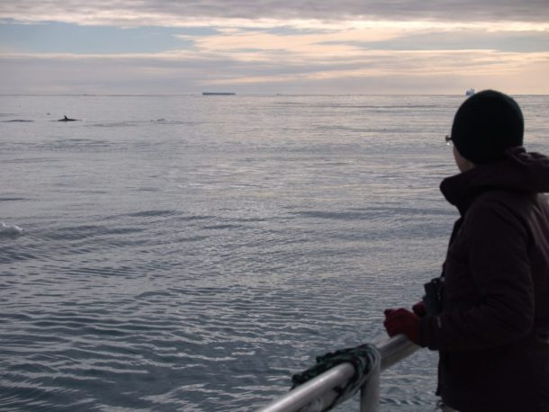 Infinity Expedition - Around Cape Adare, icebergs and killer whale in the distance