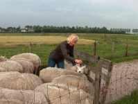 schapen scheren door Anneke Coupier Workshopteacher Vilten bij The Green Circle Workshops in de Natuur - Ambacht van Nu
