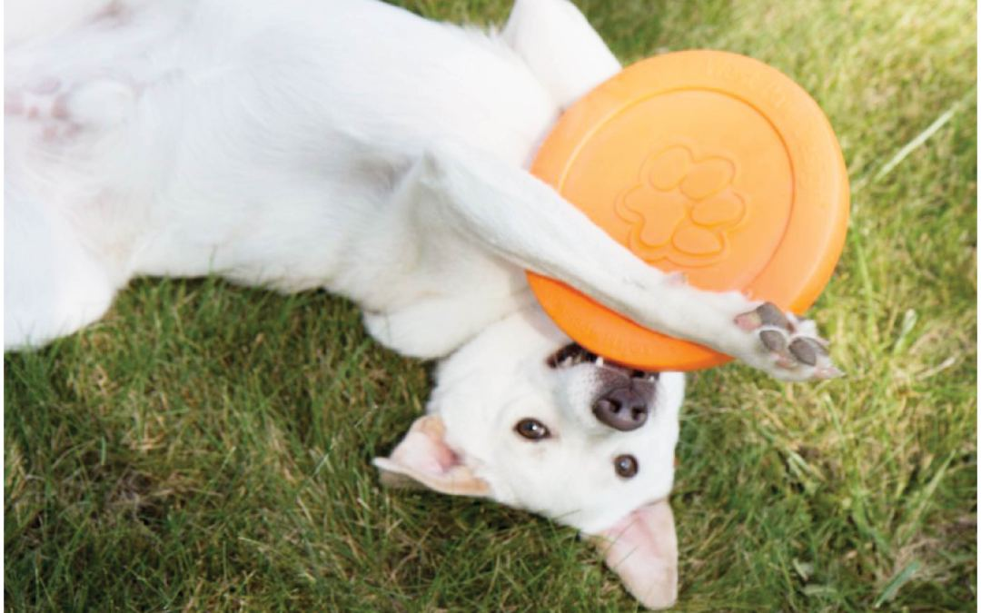 Non-Toxic, Eco-Friendly Dog Toys For Aggressive Chewers – Sampson's Faves