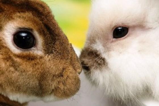 6-importantes-causas-animais-para-defender-2015-2