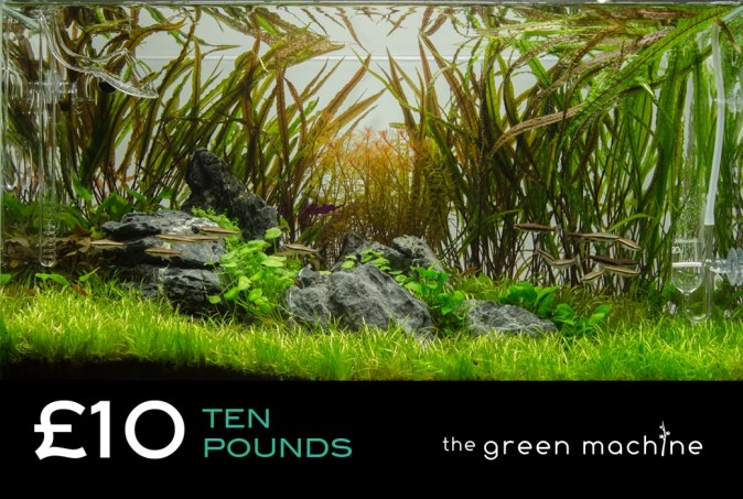 £10 Gift Voucher/Certificate for The Green Machine Aquascaping Store