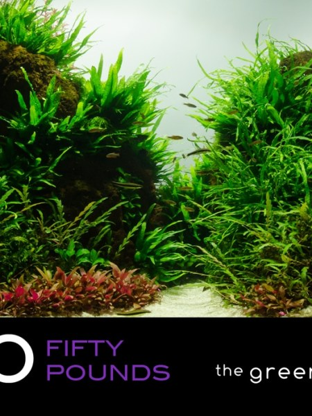 £50 Gift Voucher/Certificate for The Green Machine Aquascaping Store