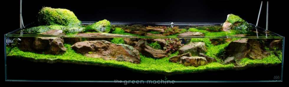 Continuity Aquascape Video & Gallery by James Findley ...
