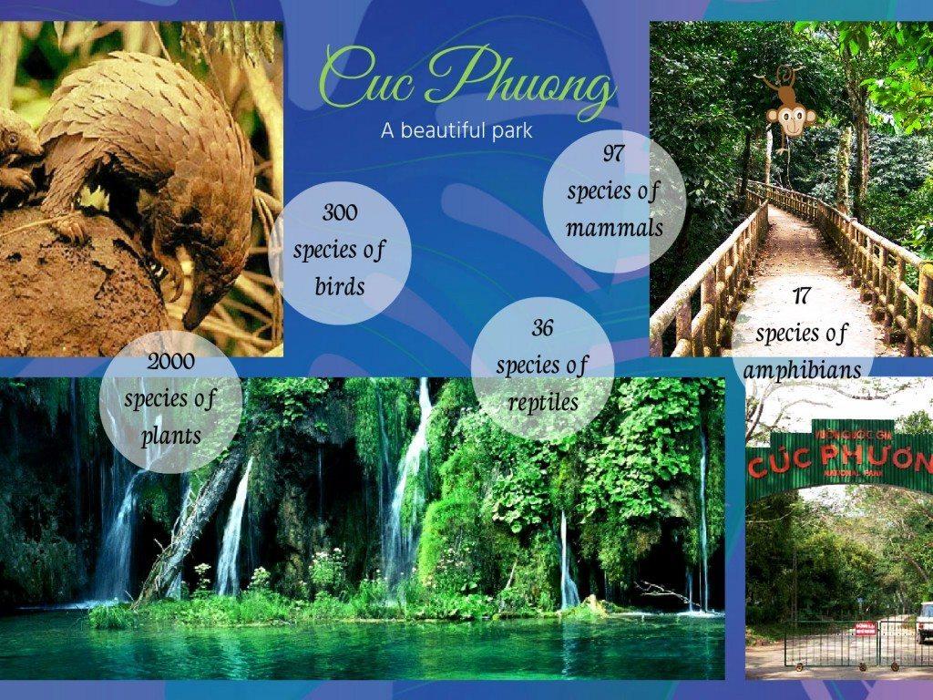 cuc phuomg park reserve vietnm ninh binh