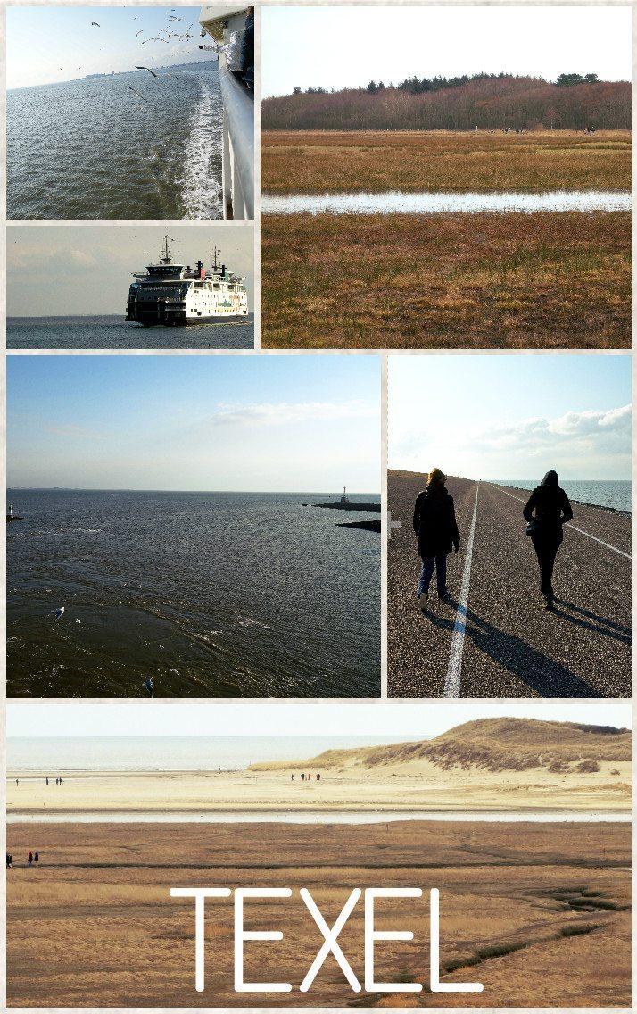 texel wadden sea netherlands holland