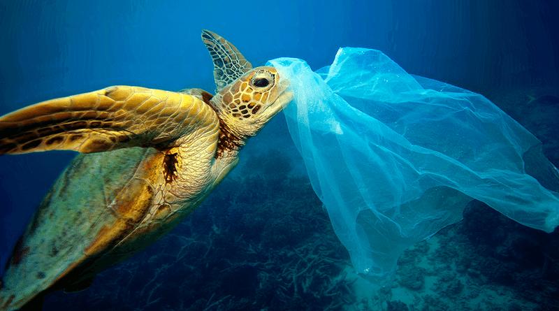 plastique nocif pour la vie marine
