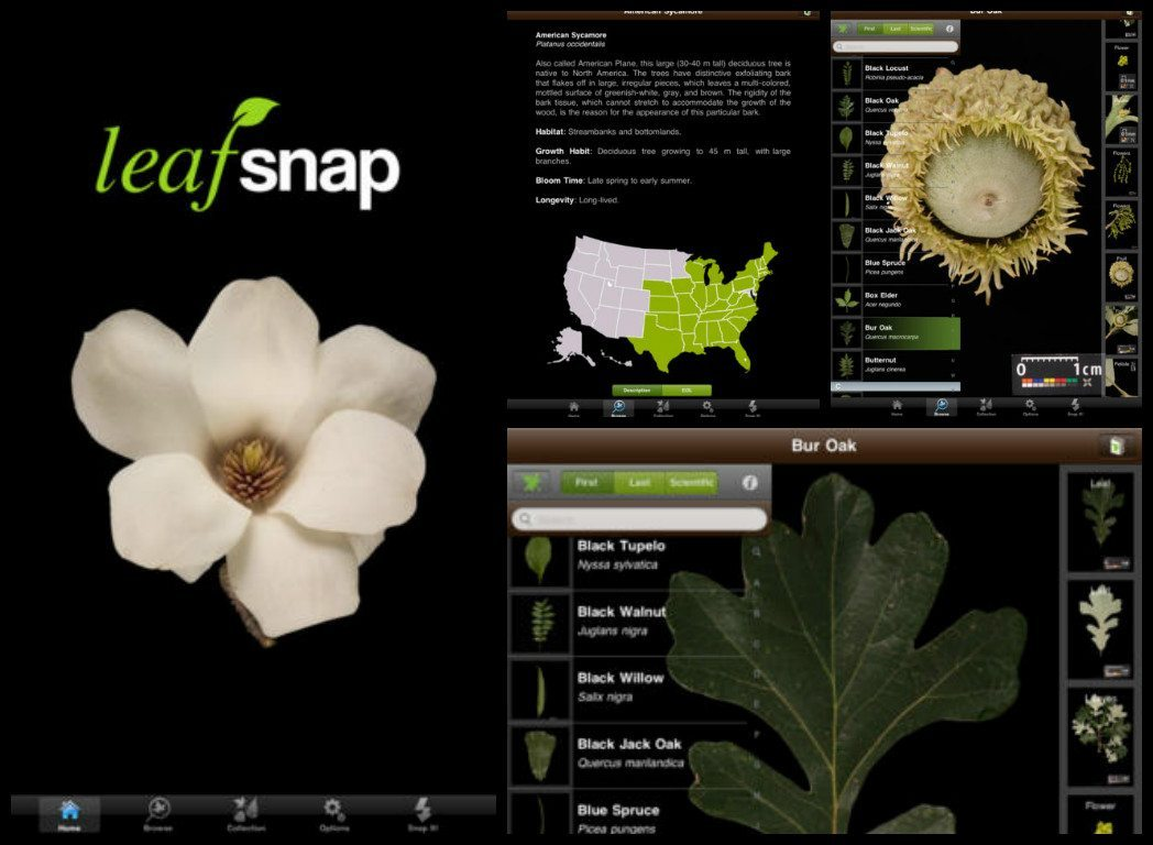 leafsnap application to recognise flowers and plants