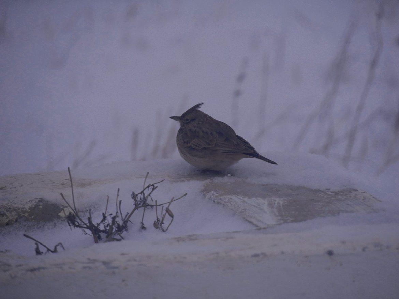 observation des oiseaux que faire en Moldavie a chisinau activités moldavie tourisme
