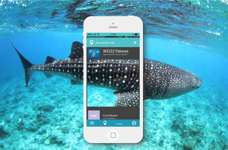 application de recherche et base de données pour les requins baleines