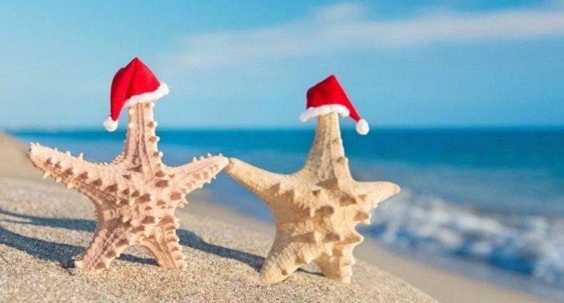 starfish sunbath holiday beach the greenpick