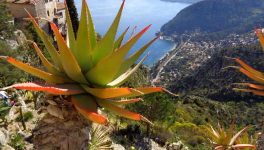 Nice – Cannes: 6 green outdoor activities on the French Riviera