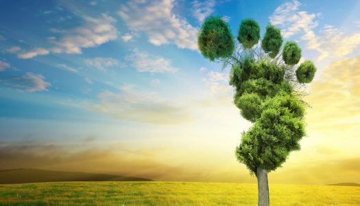 Sustainable tourism: Guide to Go Carbon Neutral on your holidays