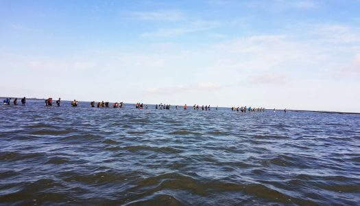 What to do in The Netherlands? Cross the sea…on foot!