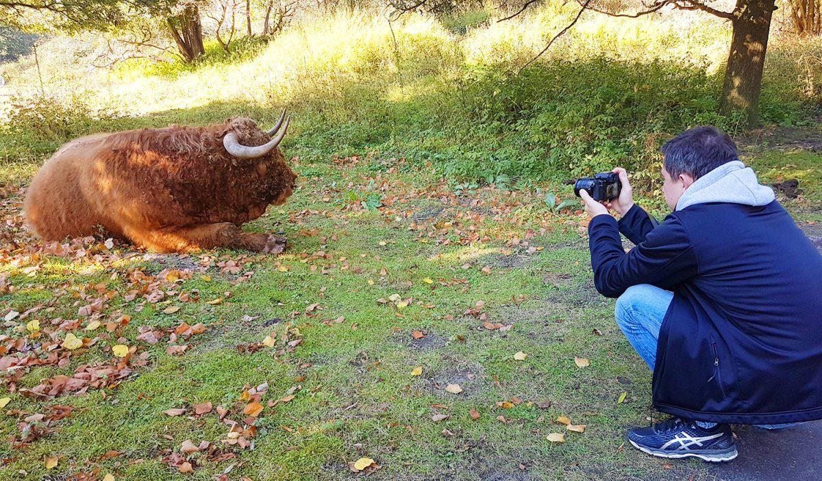 amsterdam buffalo green activity