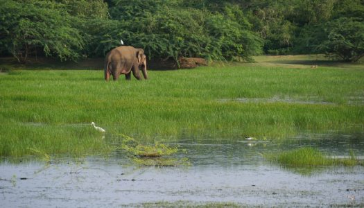 3 weeks biking through Sri Lanka