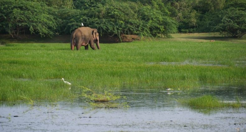 elephant bundala park sri lanka by bicycle