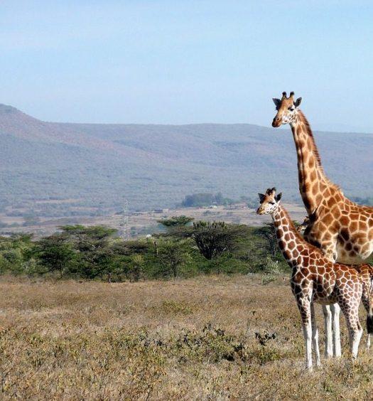 parc national kenya circuit au kenya