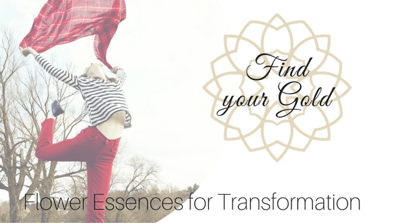 Flower Essences for Transformation – Find your Gold!