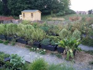 MMHS Fall Garden