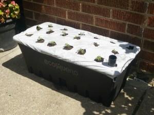 caja arugula garden