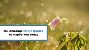 259 Amazing Nature Quotes To Inspire You Today