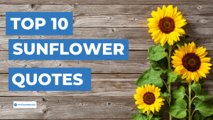 90 Beautiful Sunflower Quotes To Brighten Your Day