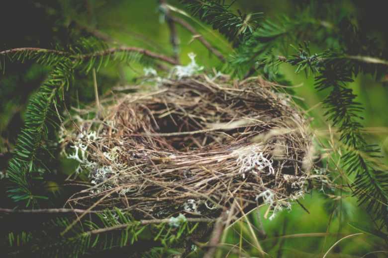 nest - a preparation