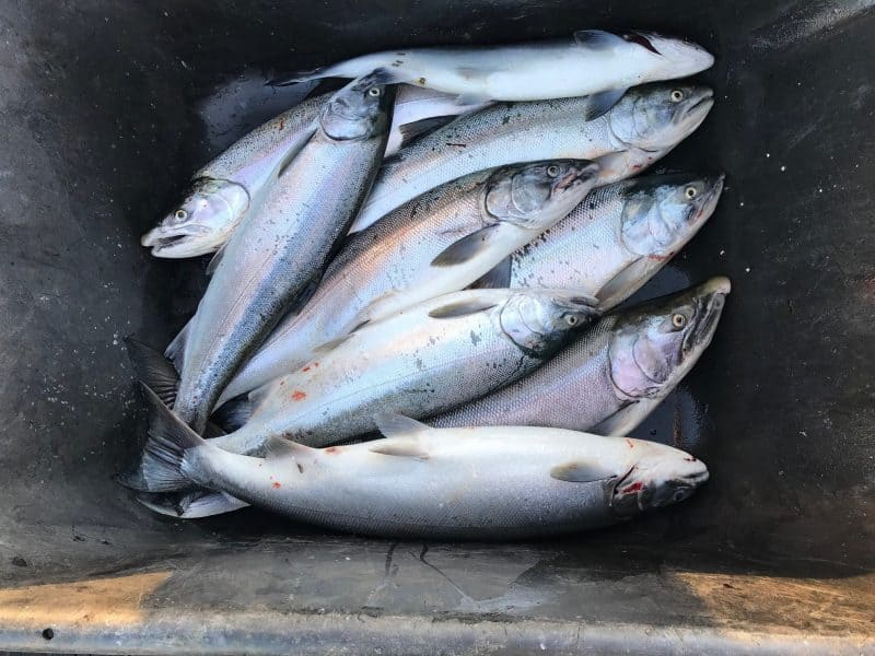 Oregon and SW Washington Fisheries Update September 20th, 2019