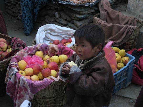 apple in Juphal