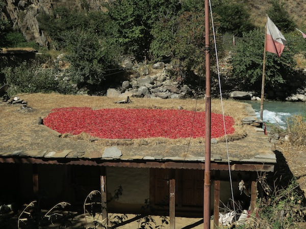 chilies drying in sun in Dolpo