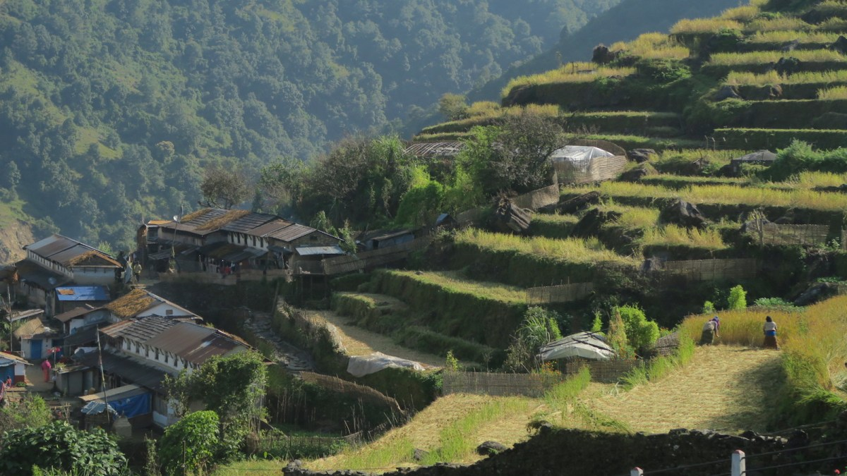 agriculture terraces in Tangting