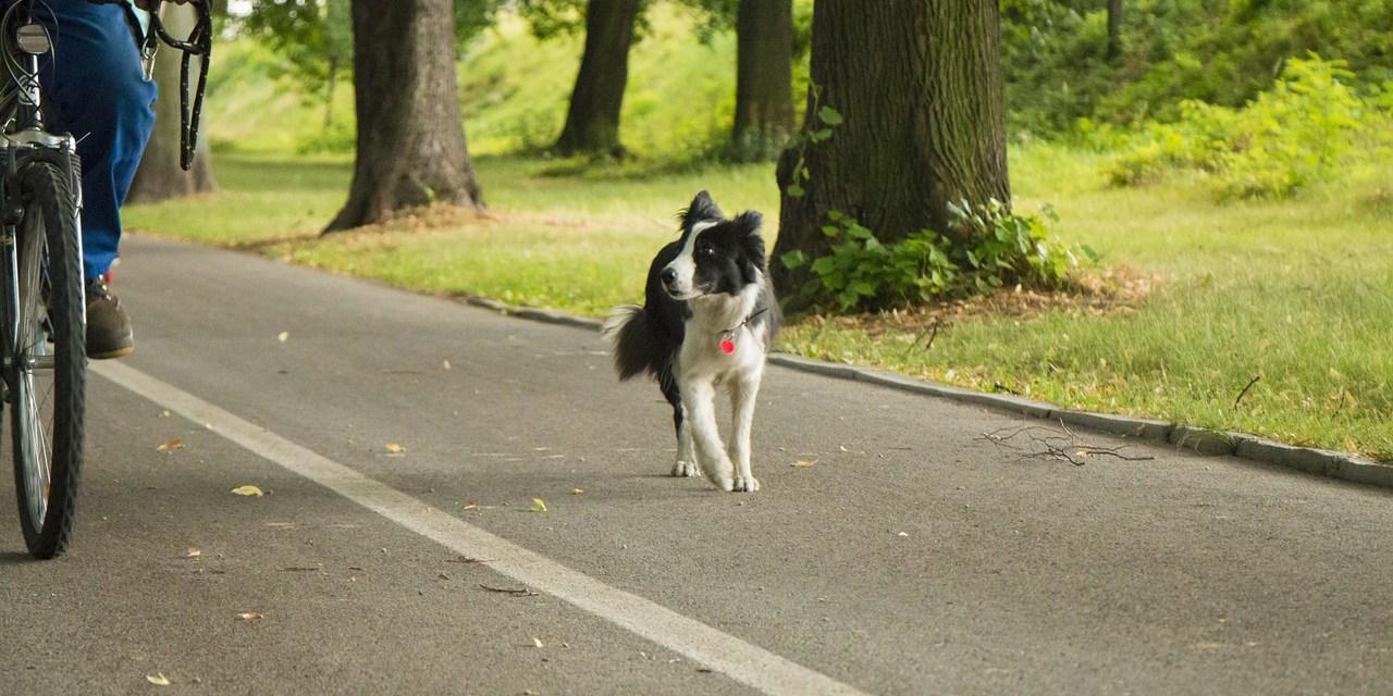 Erasmusweg: New Dog Walking Areas Designated