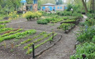 Food forests in The Hague
