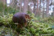 Fungi - The Hall of Einar - photograph (c) David Bailey (not the)