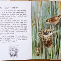 The Third Ladybird Book of British Birds - #6 The Reed Warbler