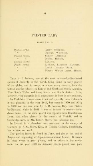 Vanessa cardui - History of British Butterflies