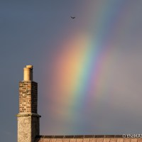 Swallow over the rainbow
